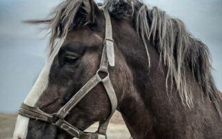 zbiórka na uratowanie konia