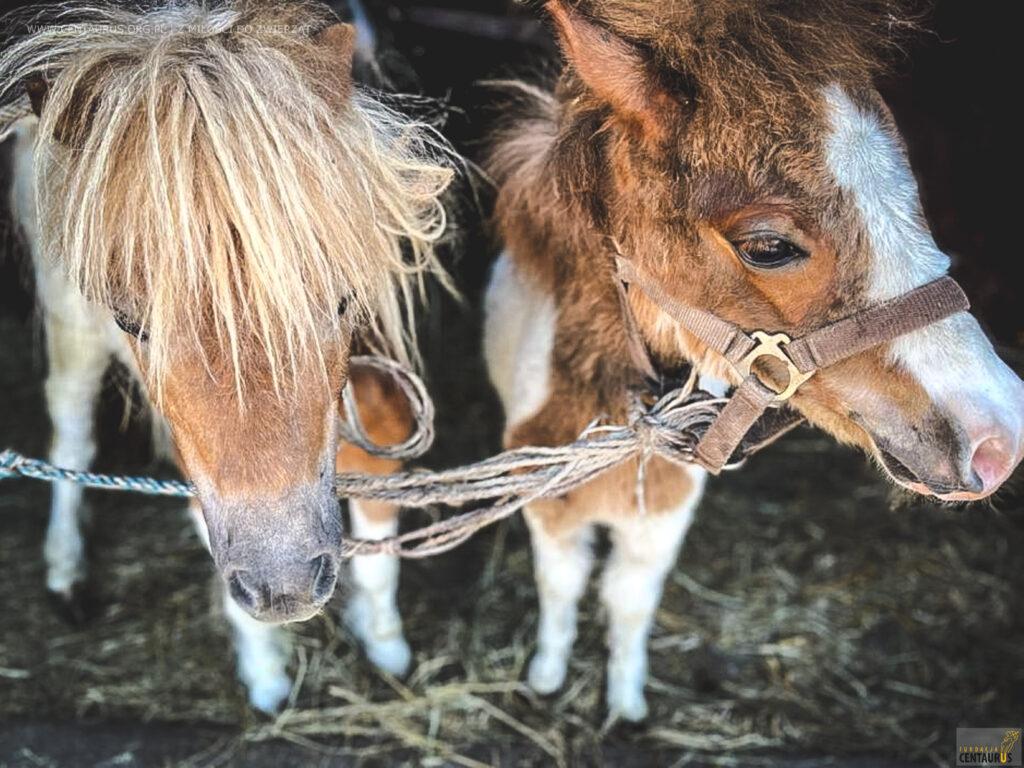 zbiórka na konie