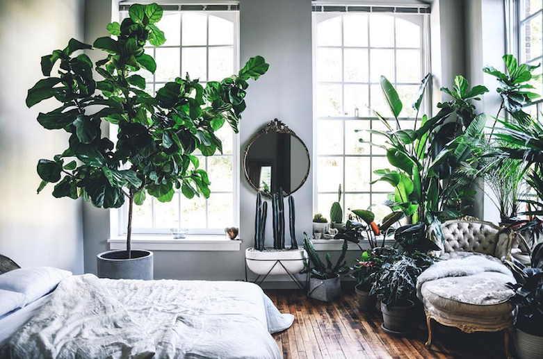dżungla w mieszkaniu